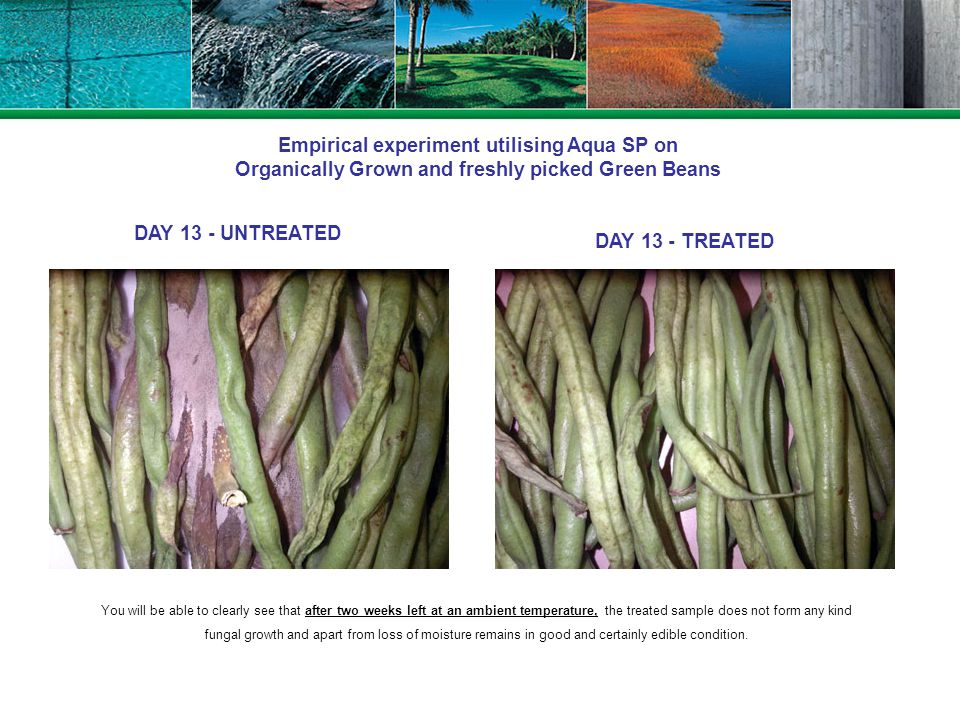 Empirical experiment utilising Aqua SP on Organically Grown and freshly picked Green Beans DAY13 - UNTREATED DAY 13 - TREATED You will be able to clea