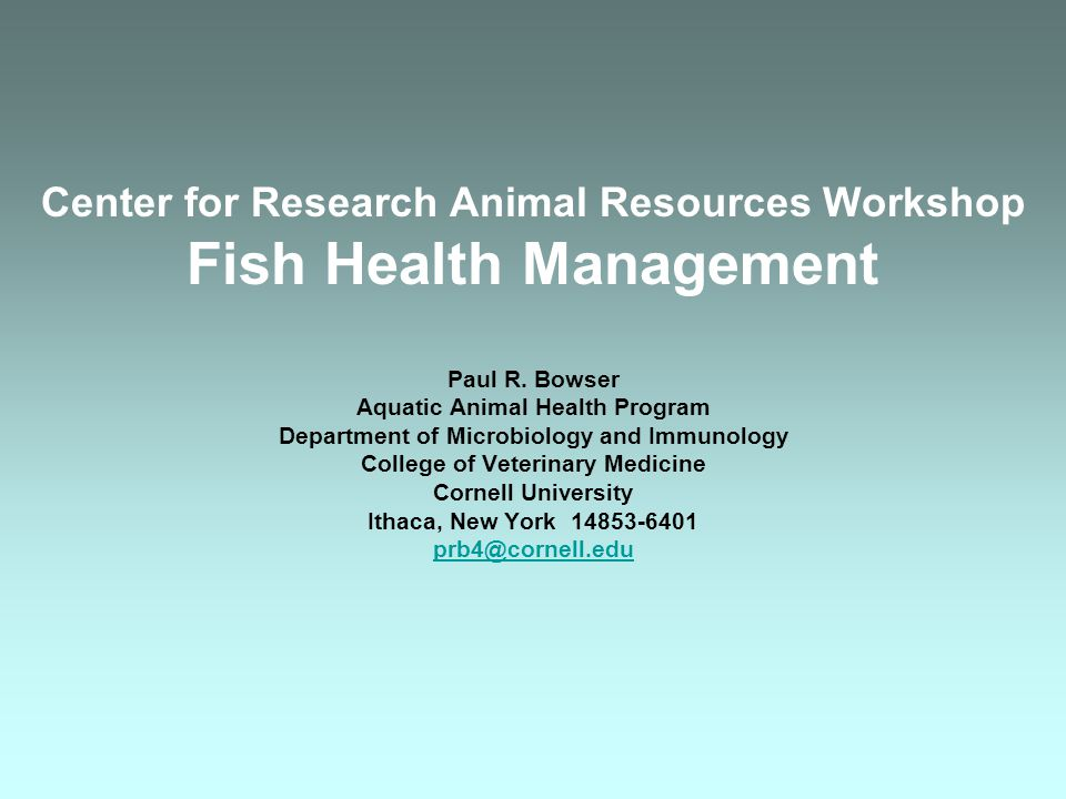 Aquaculture Systems Temperature –Optimum for fish –Interactions between temperature and DO Metabolism increases Oxygen requirement increases Food intake increases –Temperature as a Stressor Elevated Temperature Temperature Change Opt.