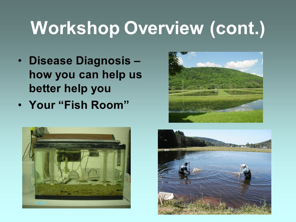 Workshop Overview (cont.) Disease Diagnosis – how you can help us better help you Your Fish Room
