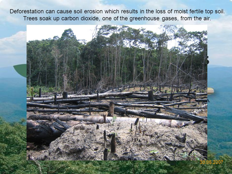 30.05.2007 Deforestation is one of the most infamous human-generated environmental disasters.