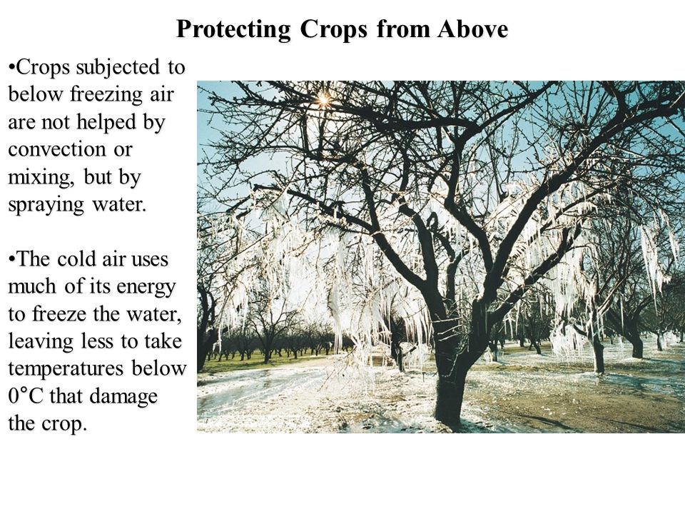 Protecting Crops from Above Crops subjected to below freezing air are not helped by convection or mixing, but by spraying water.Crops subjected to bel