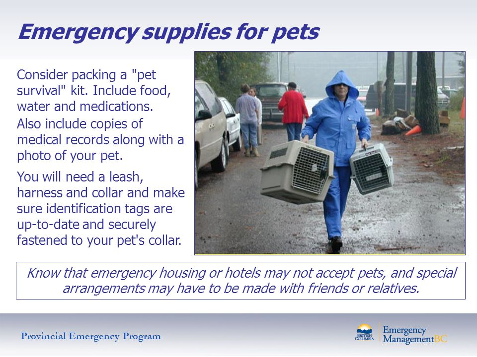 Emergency supplies for pets Consider packing a