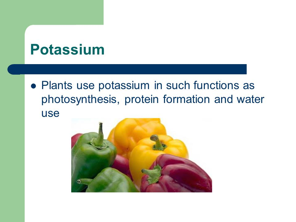 Potassium Plants use potassium in such functions as photosynthesis, protein formation and water use
