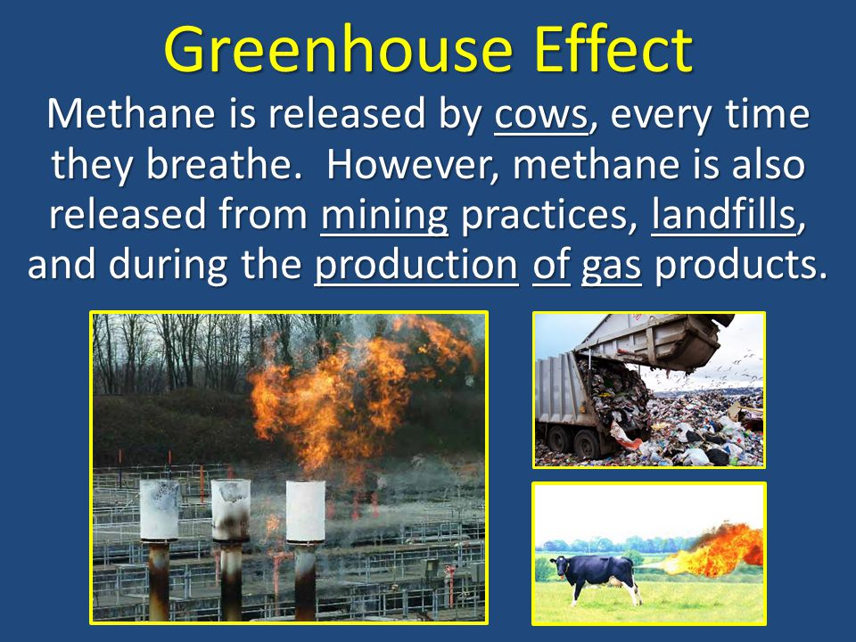 Greenhouse Effect Methane is released by cows, every time they breathe. However, methane is also released from mining practices, landfills, and during
