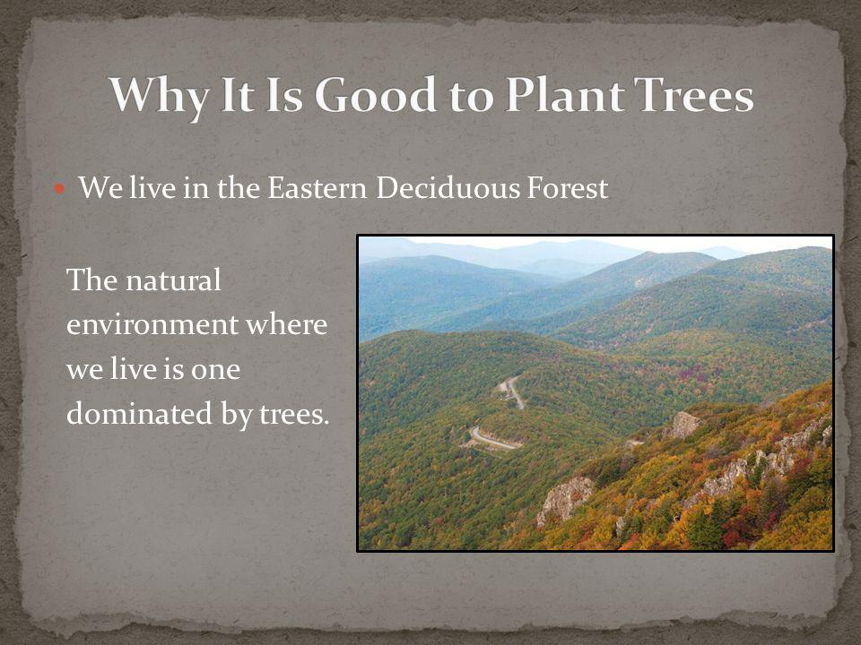 We live in the Eastern Deciduous Forest The natural environment where we live is one dominated by trees.
