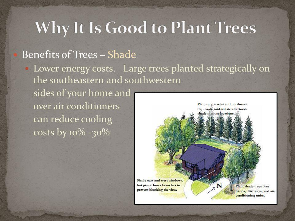 Benefits of Trees – Shade Lower energy costs.