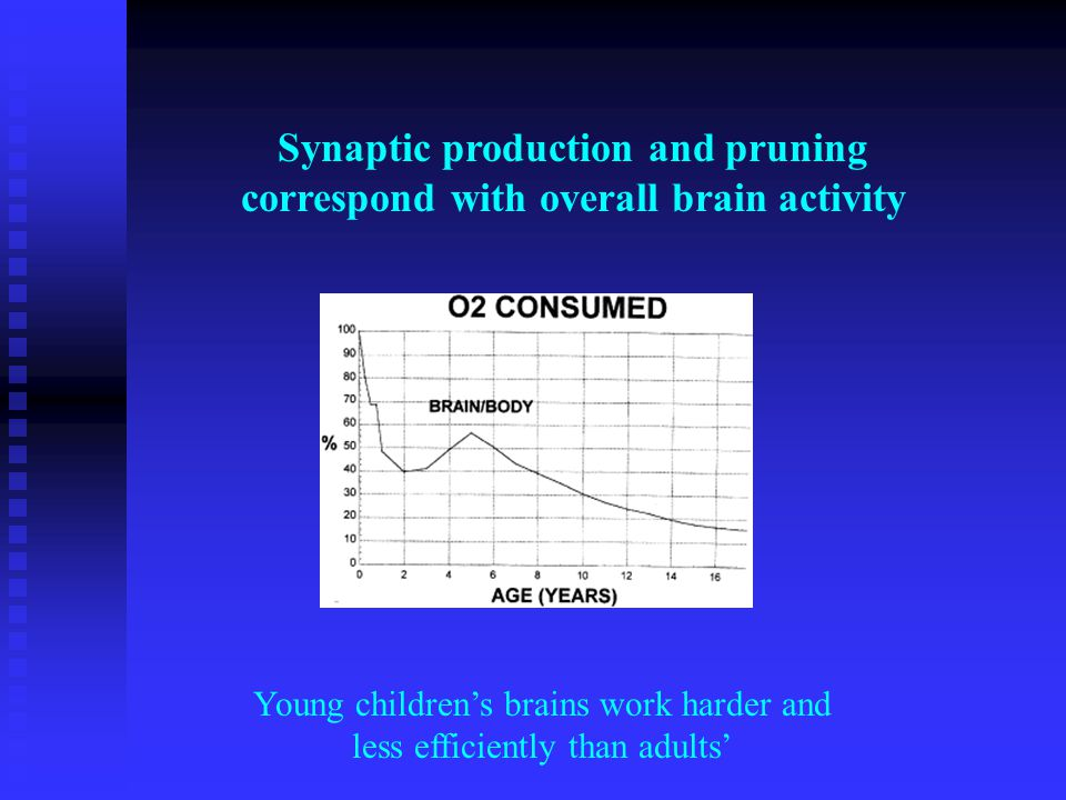 Synaptic production and pruning correspond with overall brain activity Young childrens brains work harder and less efficiently than adults
