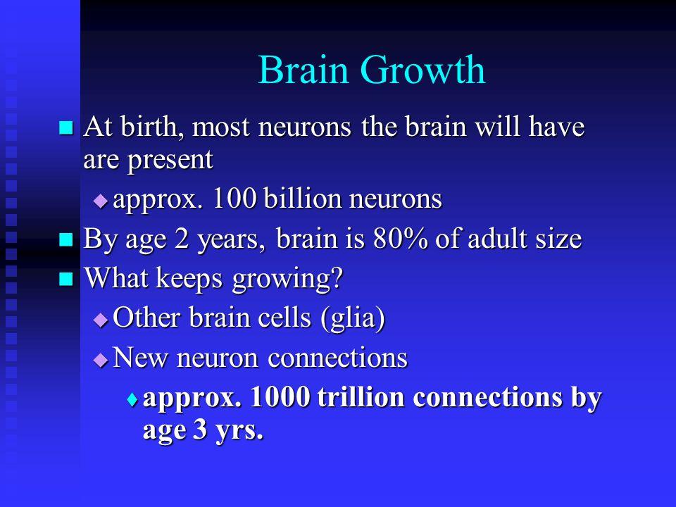 Brain Growth At birth, most neurons the brain will have are present At birth, most neurons the brain will have are present approx. 100 billion neurons