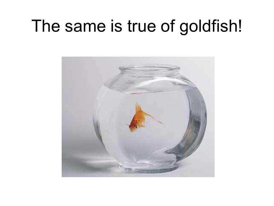 The same is true of goldfish!