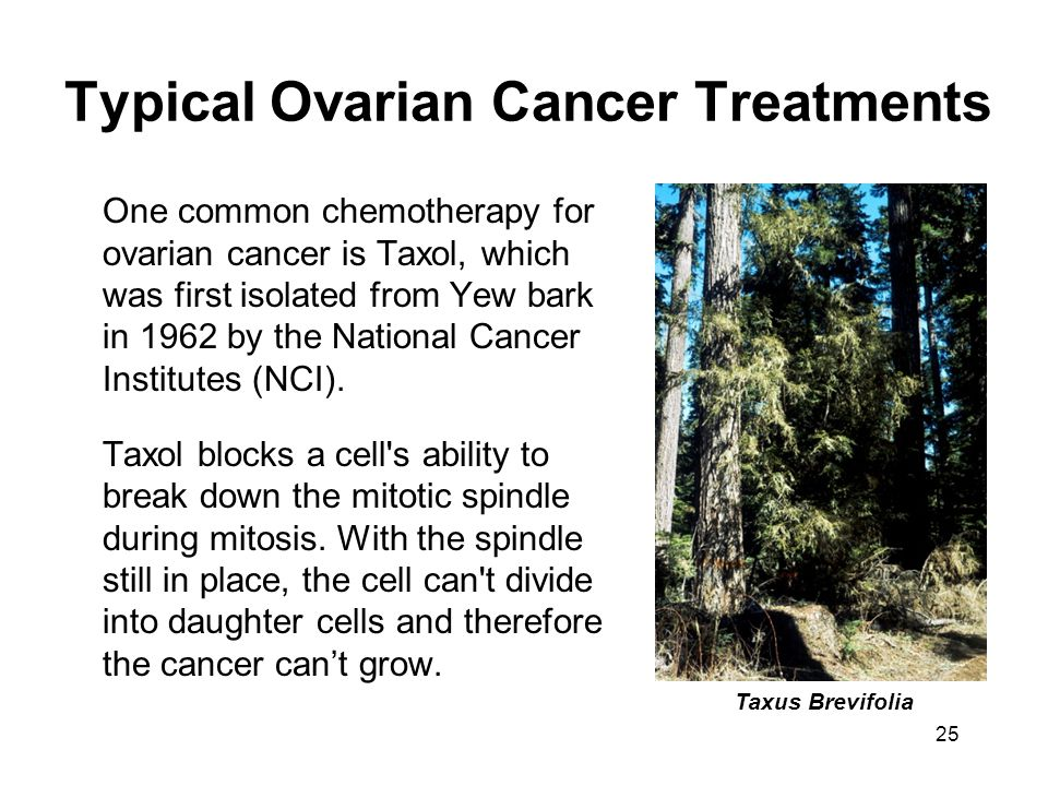 25 Typical Ovarian Cancer Treatments One common chemotherapy for ovarian cancer is Taxol, which was first isolated from Yew bark in 1962 by the National Cancer Institutes (NCI).
