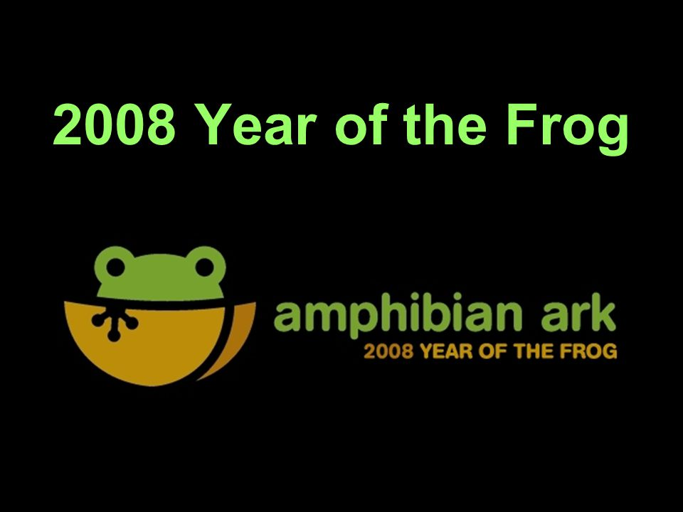 2008 Year of the Frog