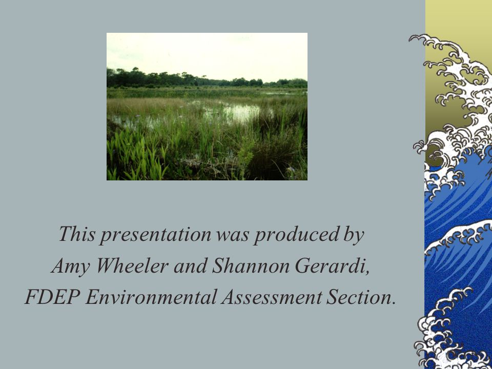 This presentation was produced by Amy Wheeler and Shannon Gerardi, FDEP Environmental Assessment Section.