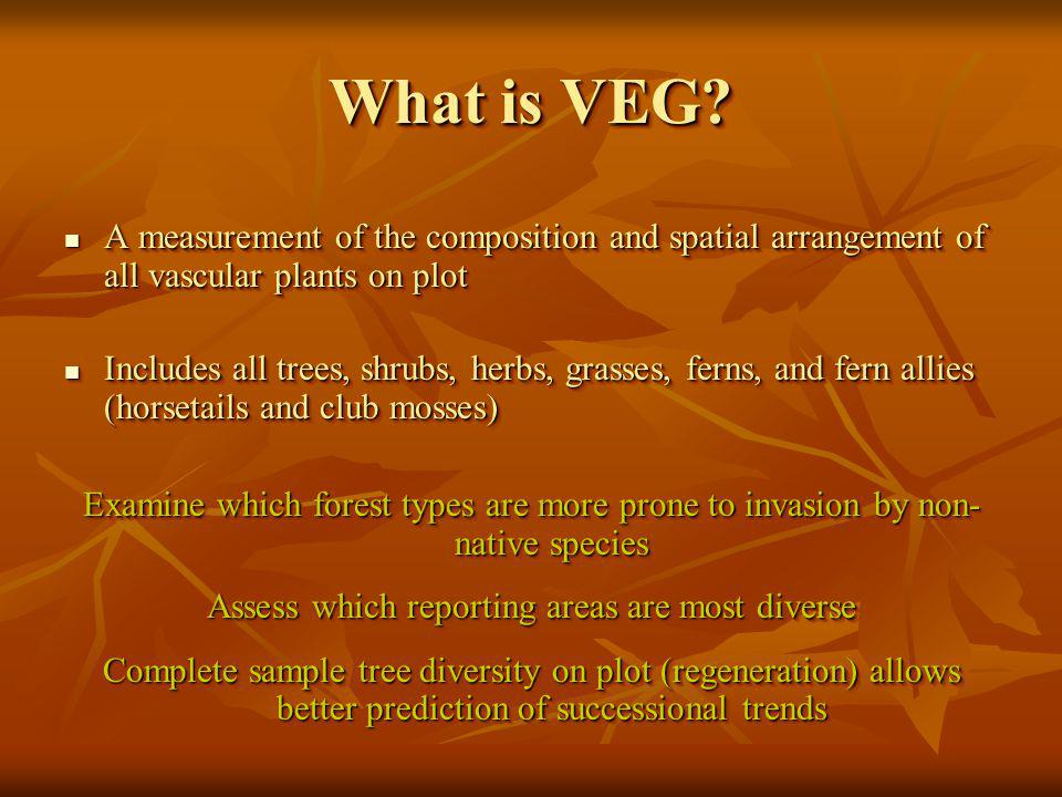 What is VEG.