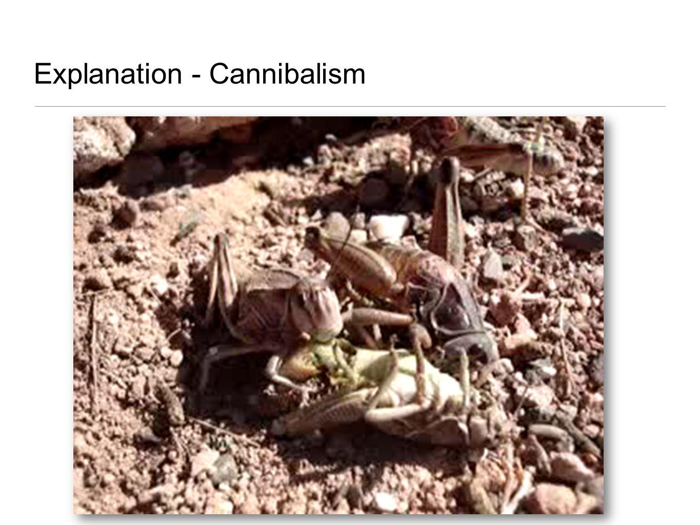 Explanation - Cannibalism