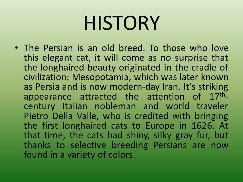 HISTORY The Persian is an old breed. To those who love this elegant cat, it will come as no surprise that the longhaired beauty originated in the crad