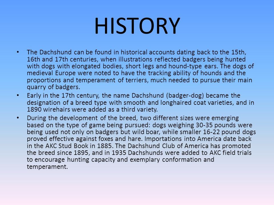 HISTORY The Dachshund can be found in historical accounts dating back to the 15th, 16th and 17th centuries, when illustrations reflected badgers being