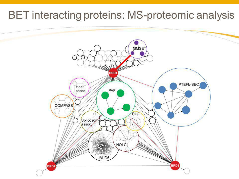 BET interacting proteins: MS-proteomic analysis