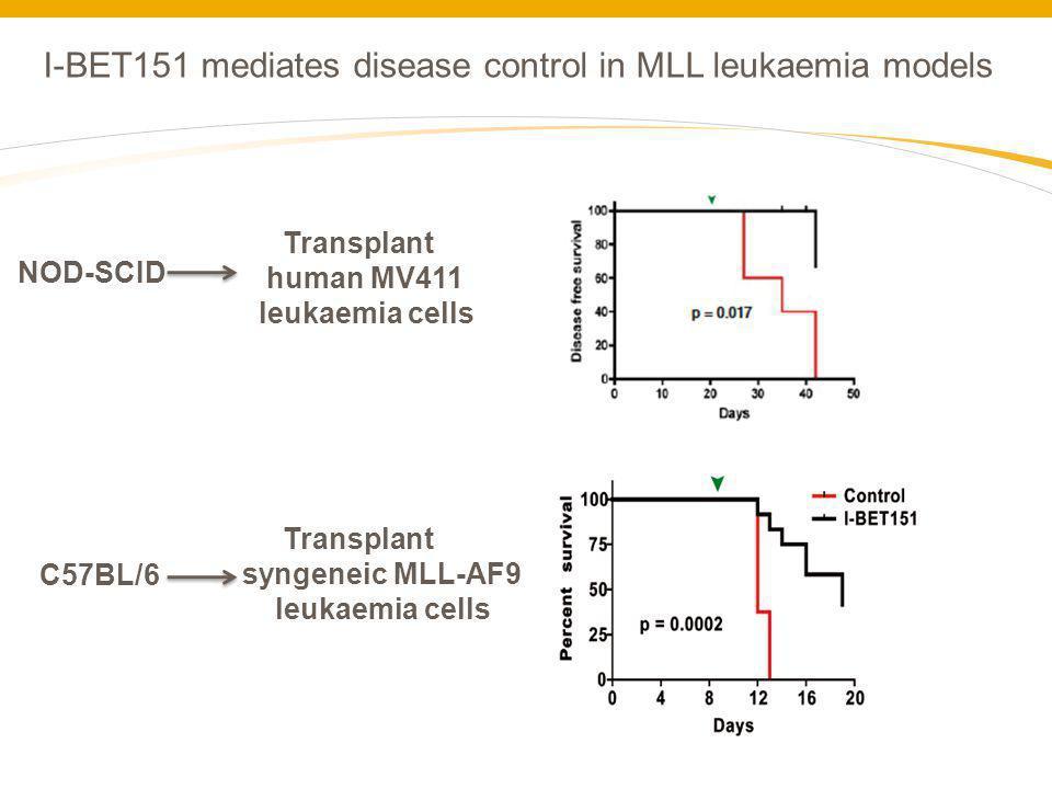 I-BET151 mediates disease control in MLL leukaemia models NOD-SCID Transplant human MV411 leukaemia cells Transplant syngeneic MLL-AF9 leukaemia cells