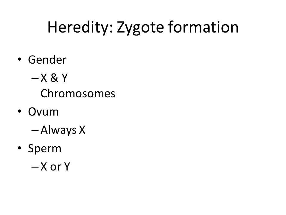 Heredity: Zygote formation Gender – X & Y Chromosomes Ovum – Always X Sperm – X or Y