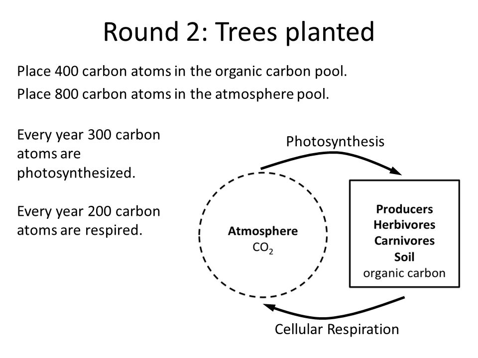Round 2: Trees planted Place 400 carbon atoms in the organic carbon pool.