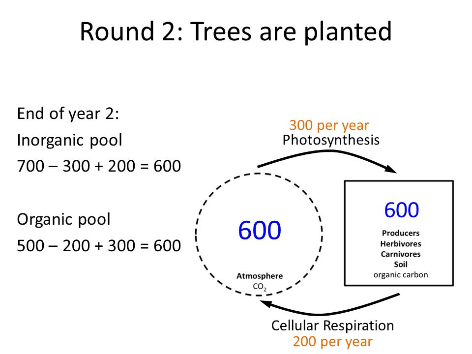Round 2: Trees are planted End of year 2: Inorganic pool 700 – 300 + 200 = 600 Organic pool 500 – 200 + 300 = 600 Photosynthesis Cellular Respiration 600 300 per year 200 per year