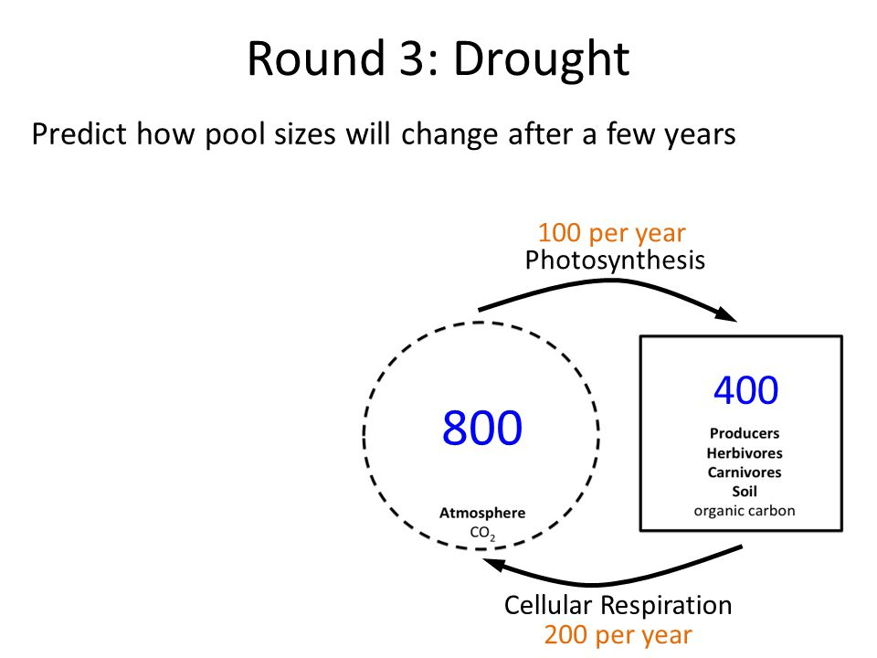 Round 3: Drought Predict how pool sizes will change after a few years Photosynthesis Cellular Respiration 800 400 100 per year 200 per year