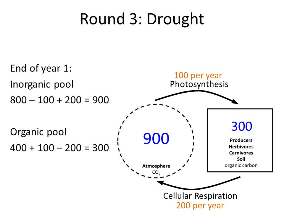Round 3: Drought End of year 1: Inorganic pool 800 – 100 + 200 = 900 Organic pool 400 + 100 – 200 = 300 Photosynthesis Cellular Respiration 900 300 100 per year 200 per year