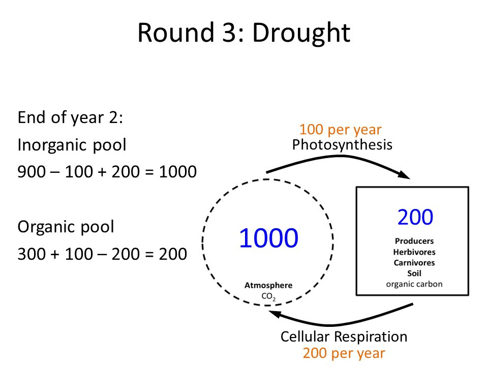 Round 3: Drought End of year 2: Inorganic pool 900 – 100 + 200 = 1000 Organic pool 300 + 100 – 200 = 200 Photosynthesis Cellular Respiration 1000 200 100 per year 200 per year