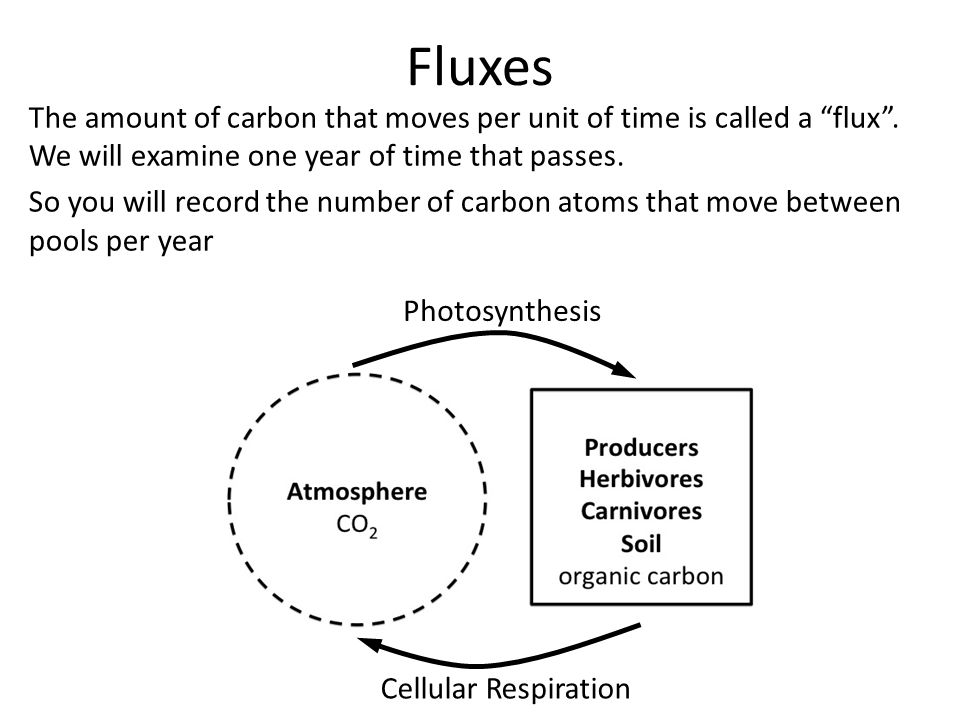 Fluxes The amount of carbon that moves per unit of time is called a flux.