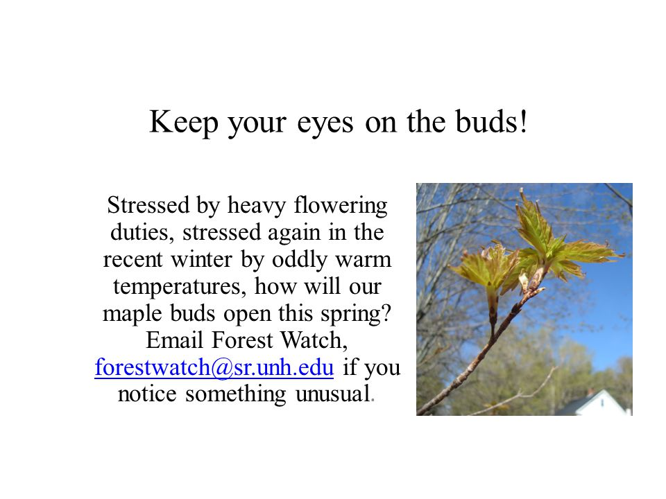 Keep your eyes on the buds.