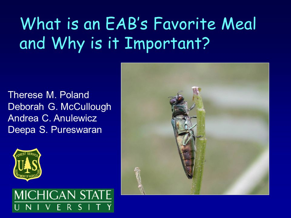 What is an EABs Favorite Meal and Why is it Important.