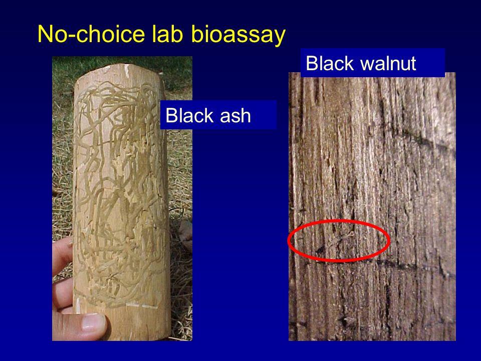 No-choice lab bioassay Black ash Black walnut