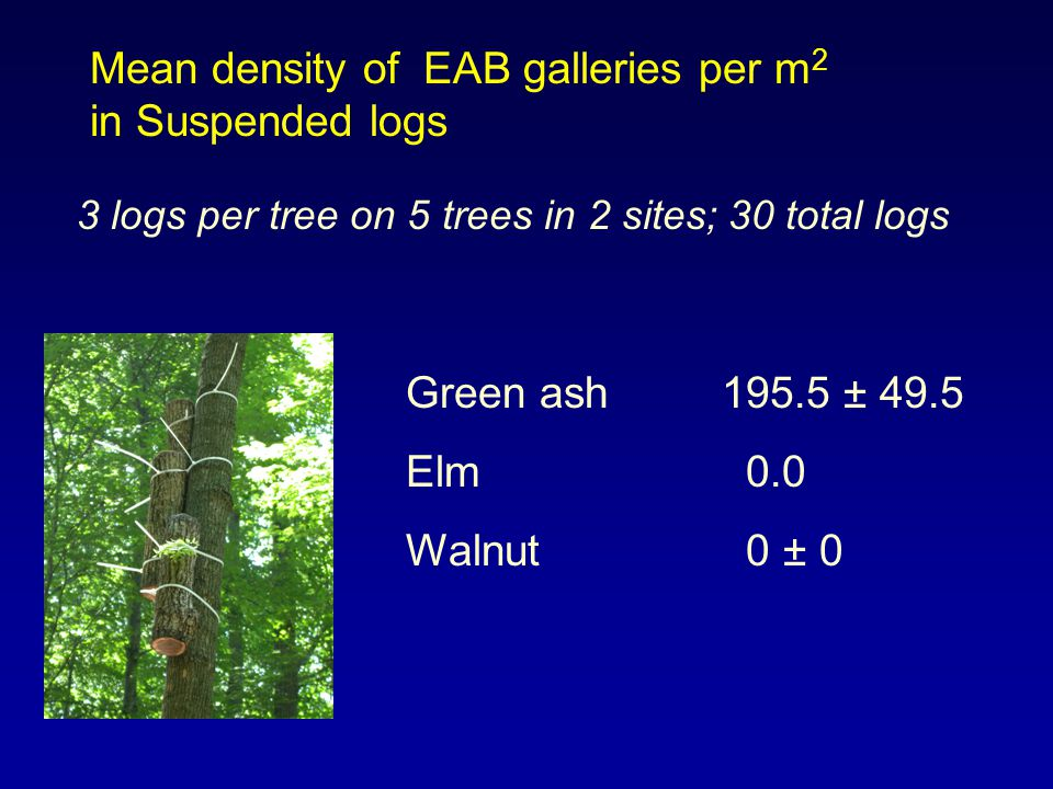 Mean density of EAB galleries per m 2 in Suspended logs Green ash195.5 ± 49.5 Elm 0.0 Walnut 0 ± 0 3 logs per tree on 5 trees in 2 sites; 30 total log