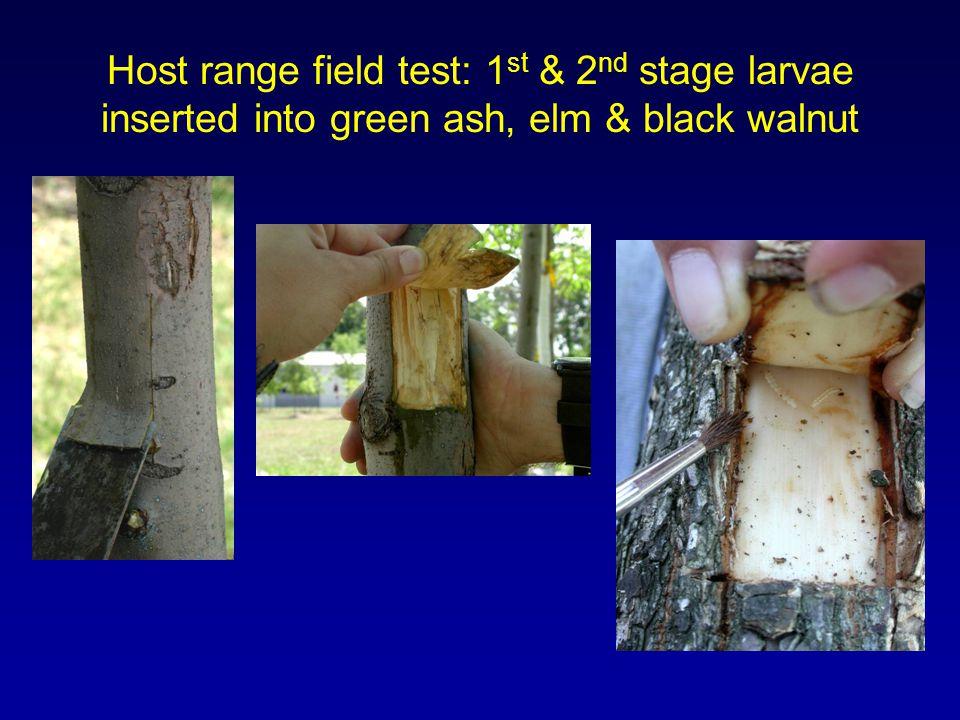 Host range field test: 1 st & 2 nd stage larvae inserted into green ash, elm & black walnut