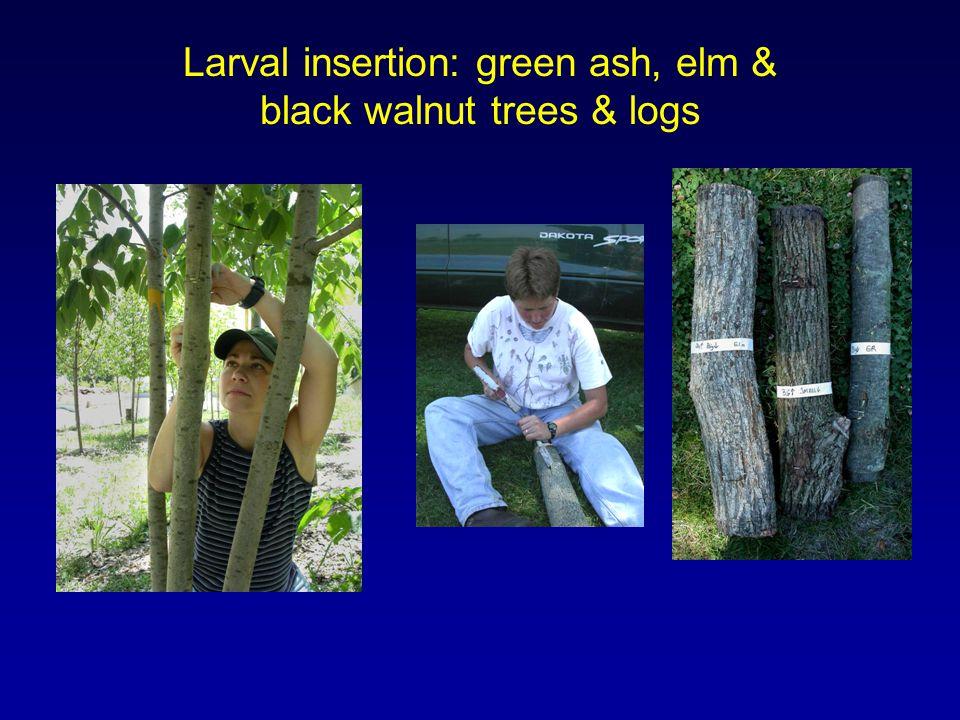 Larval insertion: green ash, elm & black walnut trees & logs