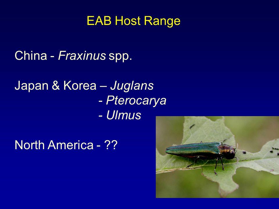 EAB Host Range China - Fraxinus spp. Japan & Korea – Juglans - Pterocarya - Ulmus North America - ??
