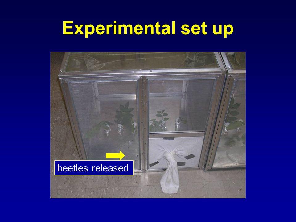 Experimental set up beetles released