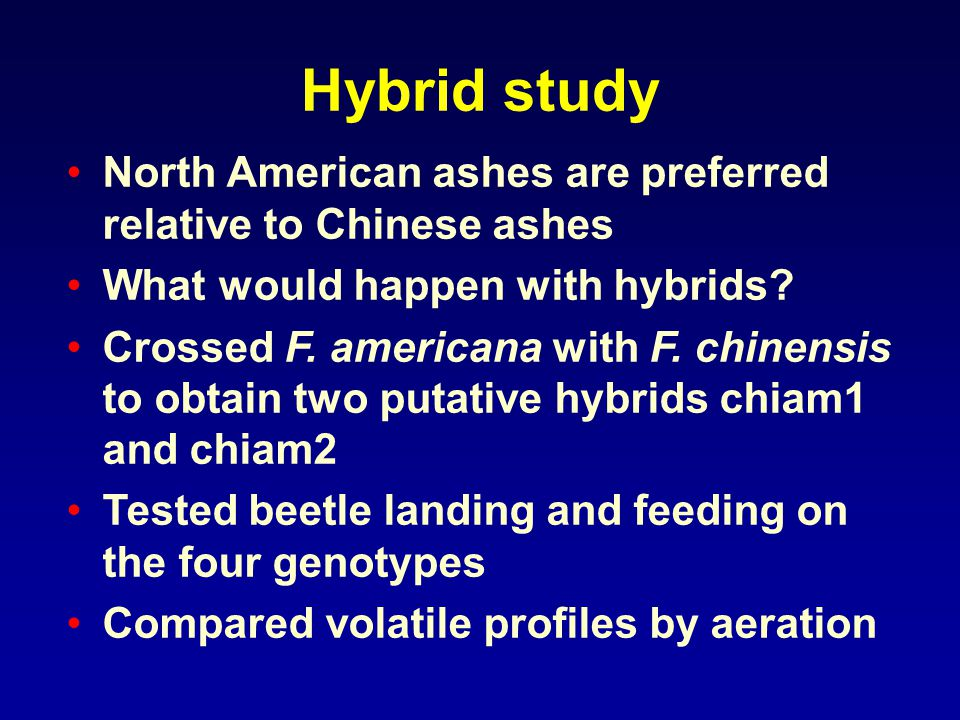 Hybrid study North American ashes are preferred relative to Chinese ashes What would happen with hybrids.