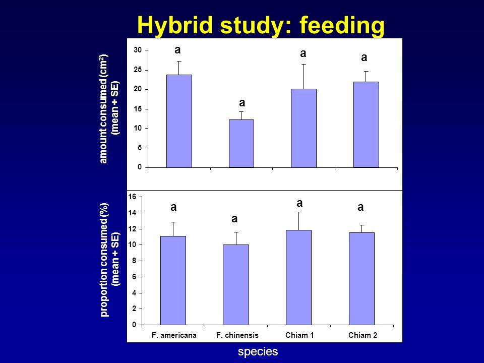 Hybrid study: feeding amount consumed (cm 2 ) (mean + SE) 0 5 10 15 20 25 30 0 2 4 6 8 10 12 14 16 F. americanaF. chinensisChiam 1Chiam 2 proportion c