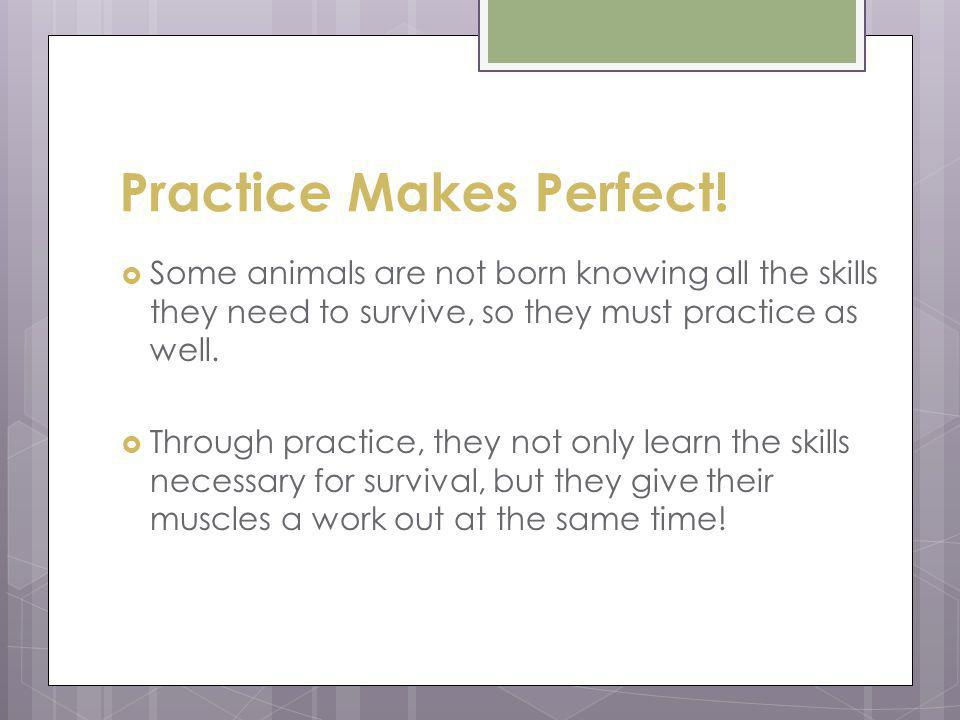 Practice Makes Perfect! Some animals are not born knowing all the skills they need to survive, so they must practice as well. Through practice, they n