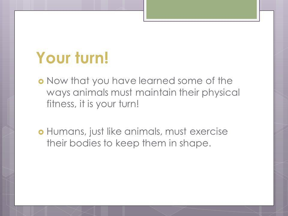 Your turn! Now that you have learned some of the ways animals must maintain their physical fitness, it is your turn! Humans, just like animals, must e