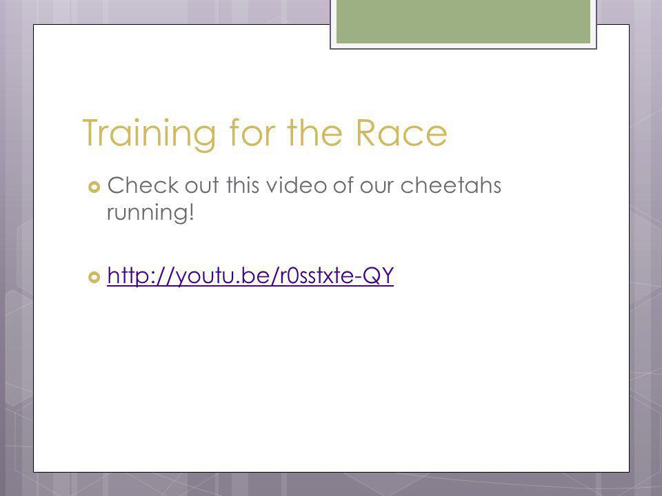 Training for the Race Check out this video of our cheetahs running! http://youtu.be/r0sstxte-QY