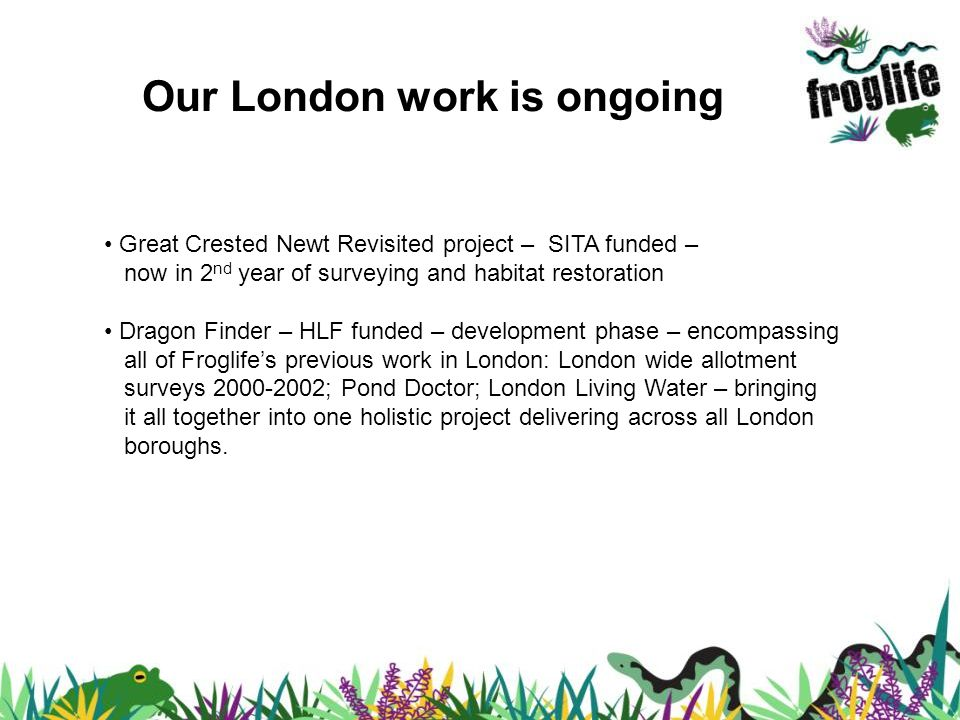 Our London work is ongoing Great Crested Newt Revisited project – SITA funded – now in 2 nd year of surveying and habitat restoration Dragon Finder – HLF funded – development phase – encompassing all of Froglifes previous work in London: London wide allotment surveys 2000-2002; Pond Doctor; London Living Water – bringing it all together into one holistic project delivering across all London boroughs.