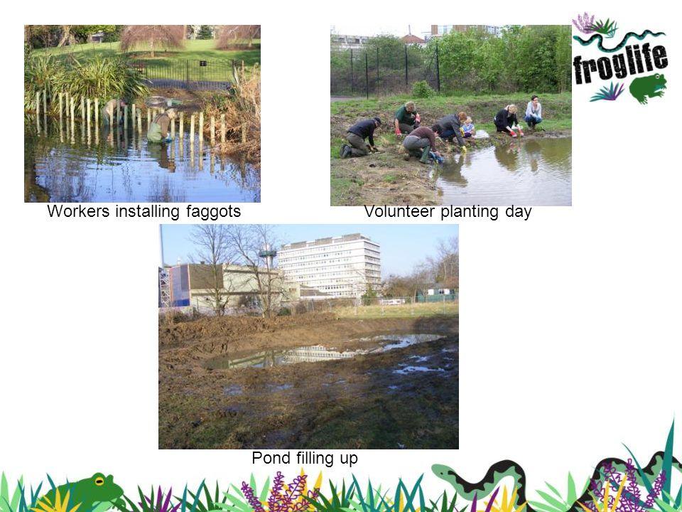 Workers installing faggotsVolunteer planting day Pond filling up