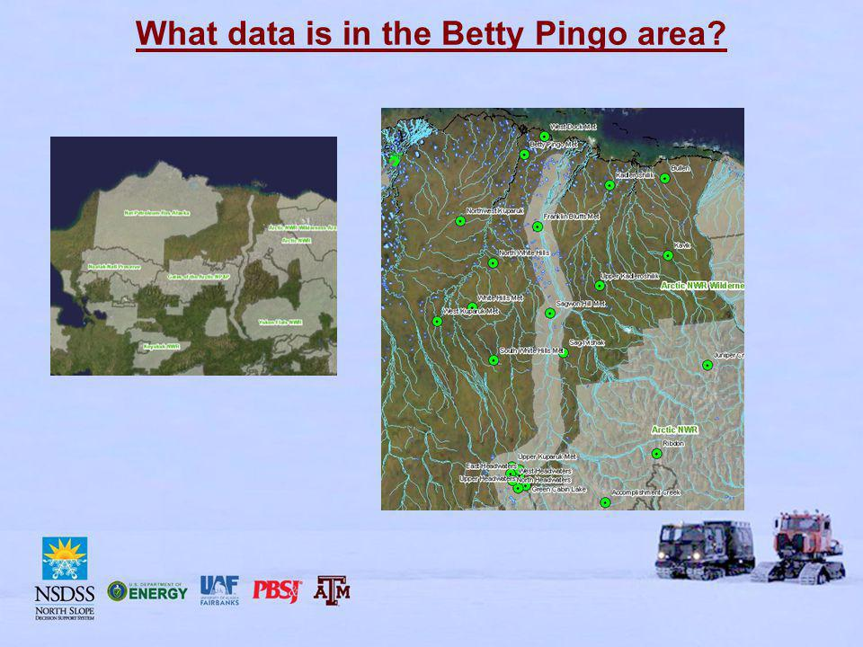 What data is in the Betty Pingo area