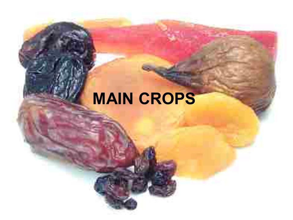 MAIN CROPS