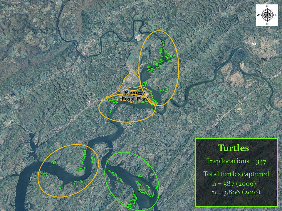 Turtles Trap locations = 347 Total turtles captured n = 587 (2009) n = 3,806 (2010) Kingston Fossil Plant