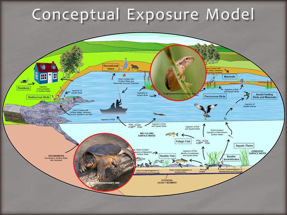 Conceptual Exposure Model mayo.personcounty.net thegreatsmokeymountains.org