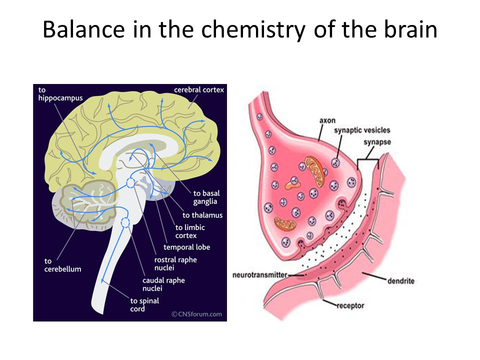 Balance in the chemistry of the brain