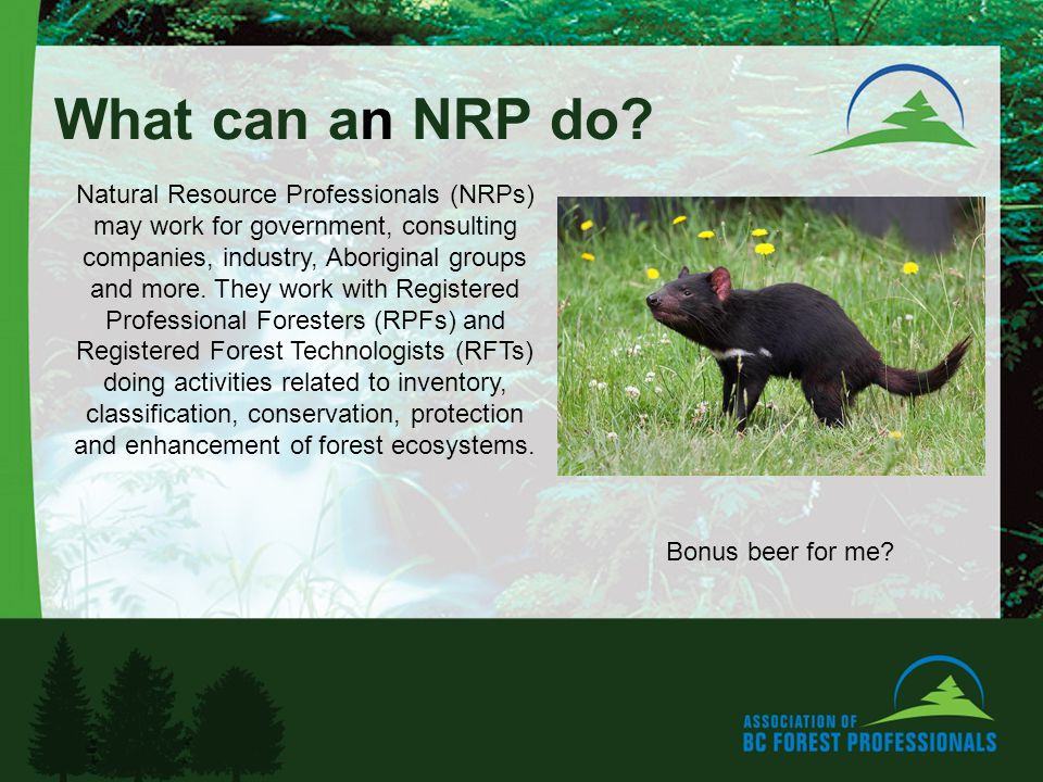 What can an NRP do.
